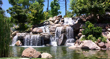 Executive Aquarium & Pond Service - Ponds and Waterfalls